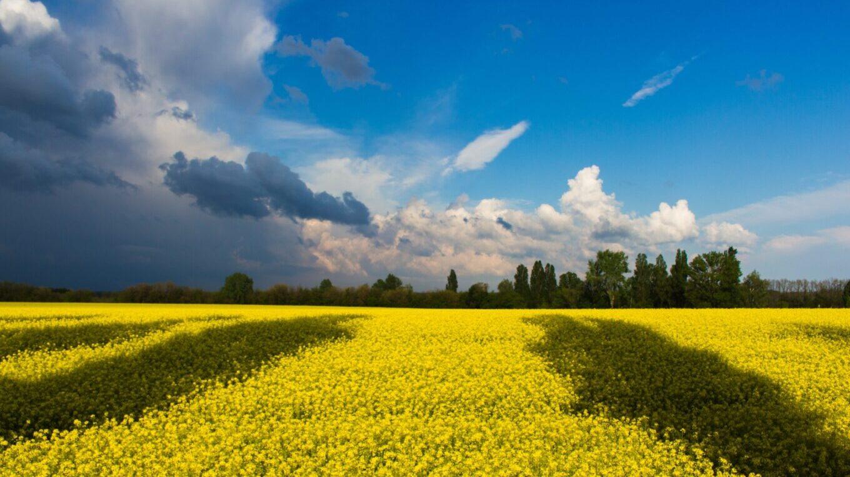 CUSTOM TOURS IN UKRAINE